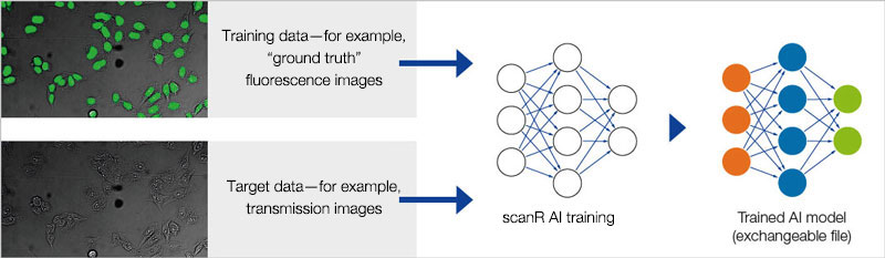 Figure 6 Schematic showing the training of the neural network.