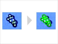 R1 recognizes iPS colonies