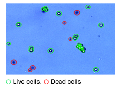 Accurate cell counting of feeder-free iPS cells with Cell Counter model R1