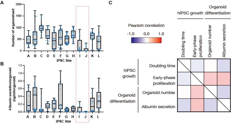 図2 分化誘導工程前のiPS細胞の増殖パラメーターと、形成された肝臓オルガノイドの分化効率の相関解析