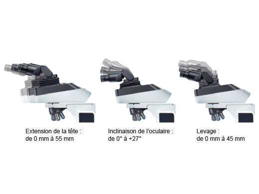 Une tête d'observation ergonomique