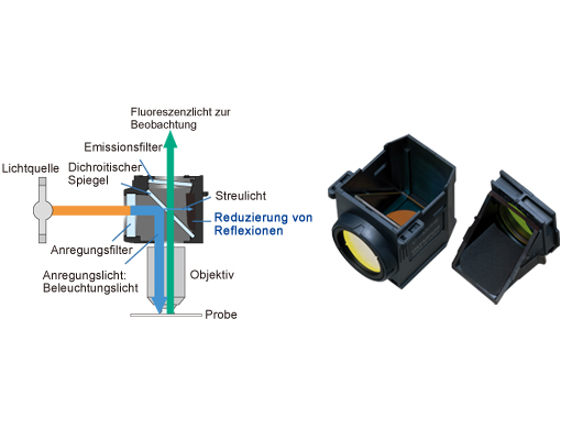 Fluoreszenz-Filtermodule mit hochentwickelter Beschichtung und Streulichtreduktion
