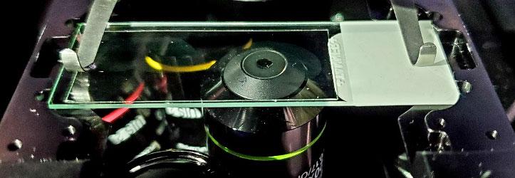 Chargement des lames sur un microscope inversé