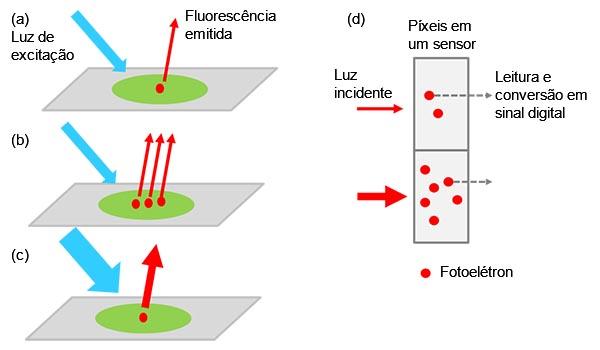 Figura 1 — Da amostra ao sinal digital: (a) um alvo marcado excitado emite luz de fluorescência. A intensidade da luz aumenta quando mais alvos estão na amostra (b) ou aplicamos uma luz de excitação mais forte (c). A intensidade do sinal é proporcional à intensidade da luz incidente (d).