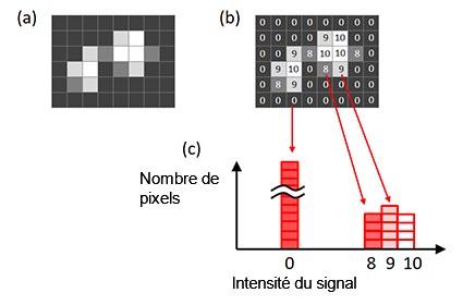 Figure 6 – Histogramme d'une image. (a) Image d'origine, (b) intensité du signal pour chaque pixel affiché dans l'image d'origine, (c) histogramme créé à partir de l'image origine.