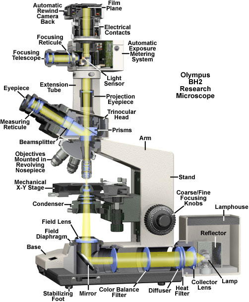 Olympus bh2 research microscope cutaway diagram ccuart Images