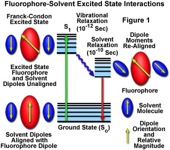 Solvent effects on fluorescence emission java tutorial java tutorial ccuart Gallery