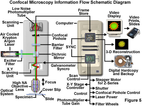 confocal microscopy introduction olympus life scienceSchematic Diagram Of A Typical Laser Showing The Three Major Parts #18
