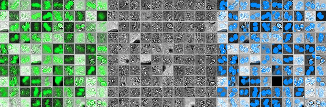 Accurate nucleus detection with deep learning technology