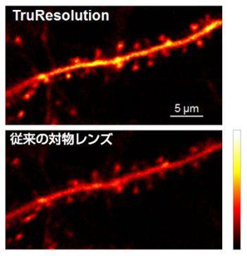 マウス脳神経細胞樹状突起のin-vivo観察結果(Thy1-YFP-H mouse, sensory cortex)