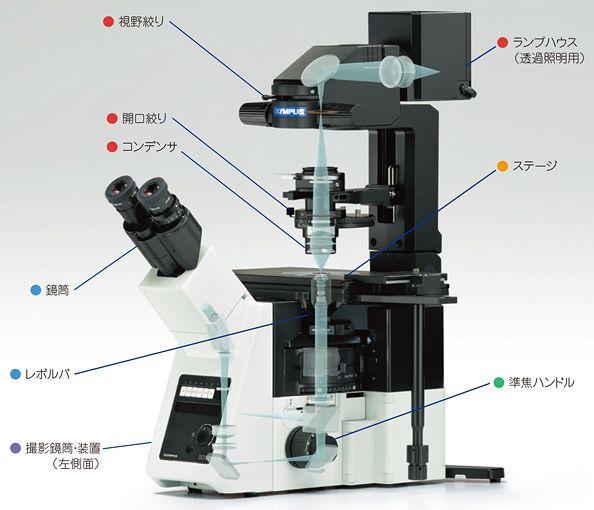 倒立型顕微鏡の照明系