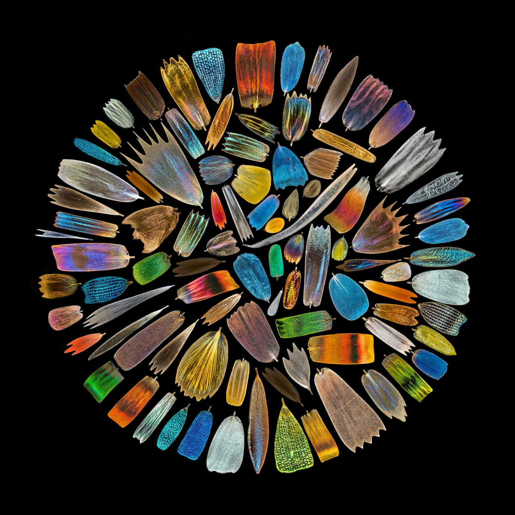 scales collected from different butterfly wings