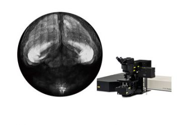 Multiphoton & Deep Imaging